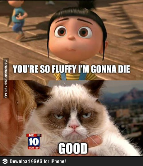 grumpy cat so fluffy
