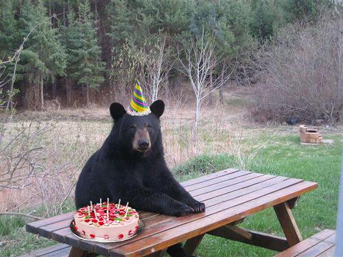 birthdaybear2